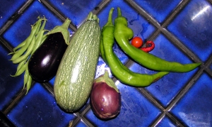 First harvest, 2009... sorta